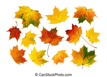 outono sai, jogo, coloridos