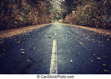 outono sai, ligado, chuvoso, estrada