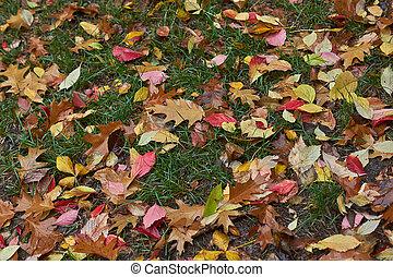 outono sai, ligado, um, caminho, em, a, forest.