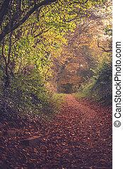 outono sai, ligado, um, estrada, em, a, floresta
