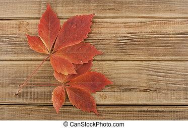 outono sai, ligado, um, madeira, fundo