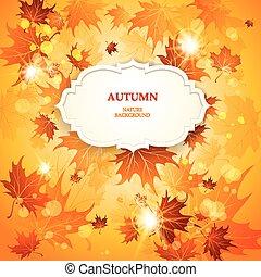 outono sai, luminoso, fundo, maple