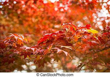 outono sai, parque, coloridos