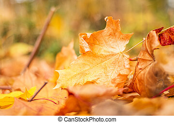outono sai, parque