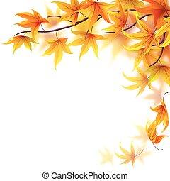 outono sai, ramo, maple