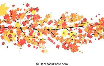 outono sai, ramo