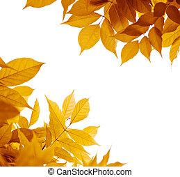 outono sai, sobre, branca, experiência., folha, borda, com, amarela, laranja, marrom, cores