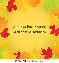 outono sai, vetorial, maple, fundo