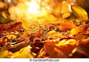 outono sai, vivamente, luz solar, queda