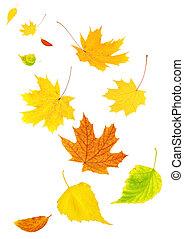 outono sai, voando