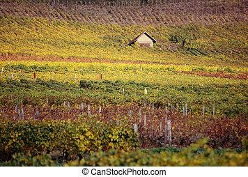 outono, savoy, vinhedos, frança