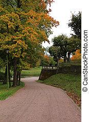 outono, seis, árvore