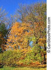outono, seis, parque