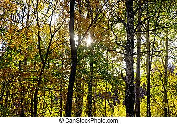 outono, sol, floresta