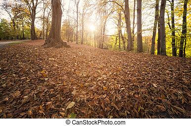 outono, sol, floresta, chama