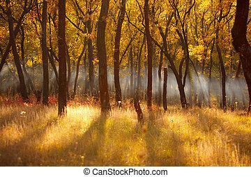 outono, sol, floresta, fumaça