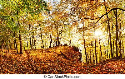outono, sol, floresta, landcape