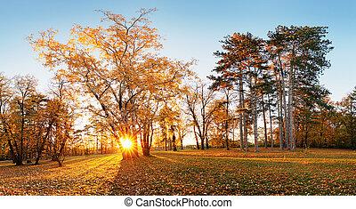 outono, sol, floresta parque