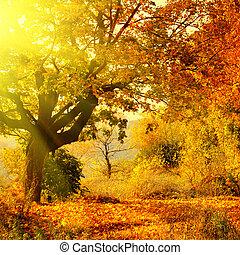 outono, sol, floresta, viga