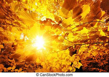 outono, sol, folhas, através, brilhar