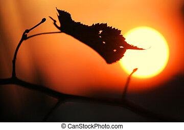 outono, sol, s, sundown