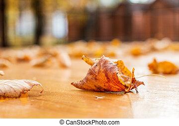 outono, tabela, folhas