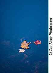 outono, trio