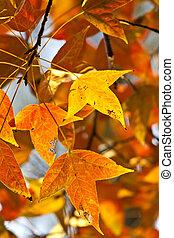 outono, vermelho sai