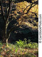 Outono, vibrante, impressionante, floresta, paisagem