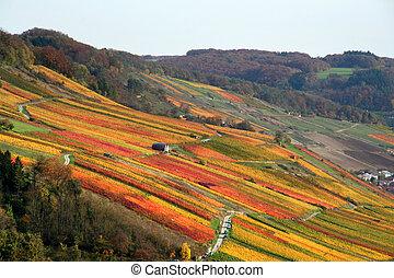 outono, vinhedo, paisagem