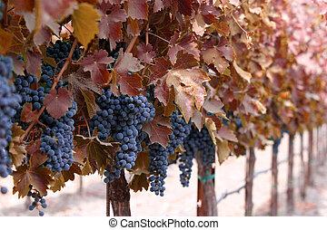 outono, winery