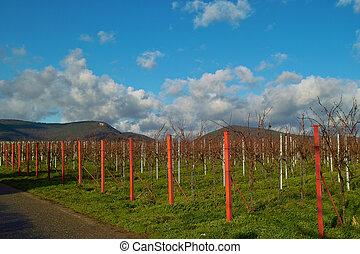 outono, wineyards