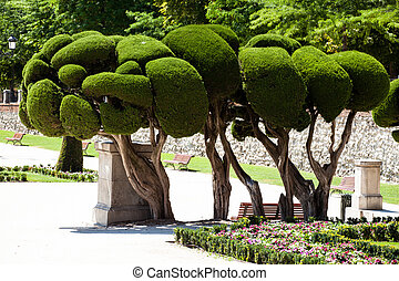 Outstanding cypress trees in Retiro Park in Madrid, Spain
