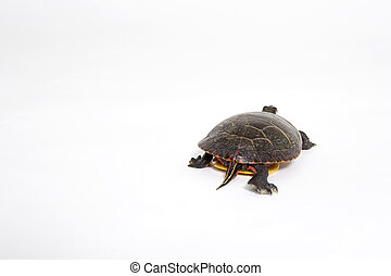 Outta Here - Turtle Leaving