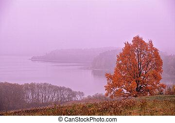 outubro, dawn., outono, morning., outono, colours., vermelho, dawn.