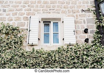 ouvert, clématite, autour de, mur, au-dessus, fleurir, volets, blanc, plastique, fenêtre, house.