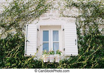 ouvert, mur, sur, pierre, volets, blanc, plastique, fenêtre, escalade, it., plante