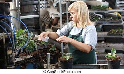 ouvrier, fonctionnement, femme, fleurs, convoyeur, industrie