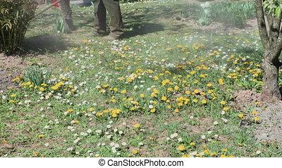 ouvrier, jardin, découpage, potentiomètre ajustable mauvaise herbe, herbe