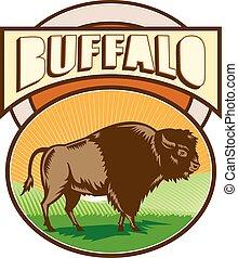 ovale, bisonte, americano, bufalo, woodcut