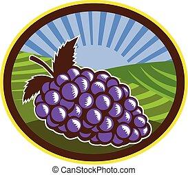 ovale, woodcut, uva, vigneto, fattoria