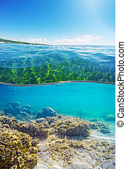 over and under water surface of a Sardinian beach