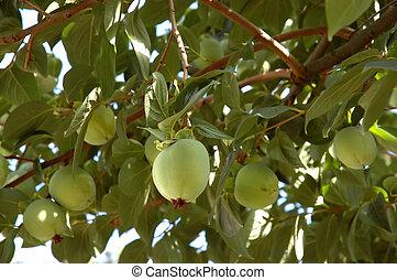 Over-laden fruit tree - An over-laden fruit tree