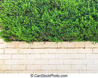 Over white stone fence beautiful green bushes. Close up shot