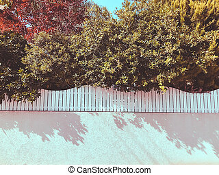 Over white wooden fence beautiful green leaves. Close up shot
