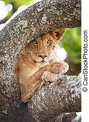 overblijfsels, boompje, op, een, leeuw, afsluiten