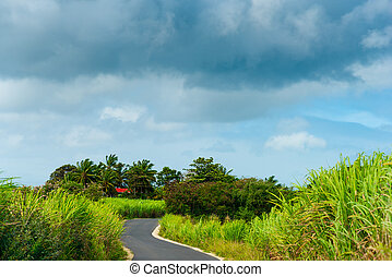Overcast sky over a contry road in Guadeloupe