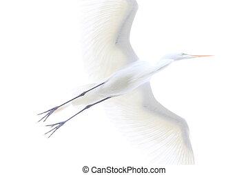 overexposed egret - White egret flying over the camera.