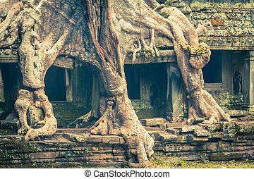 overgrowing, antico, can, albero, angk, parti, preah, radice, tempio
