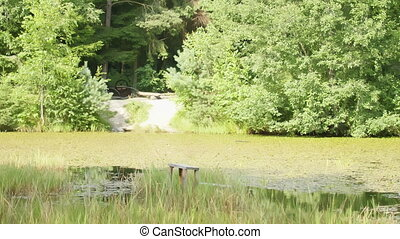 Overgrown forest lake on a bright sunny day, camera movement